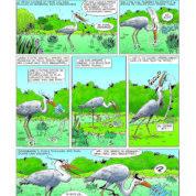 Avant-première : Les Oiseaux avec Bamboo (3)